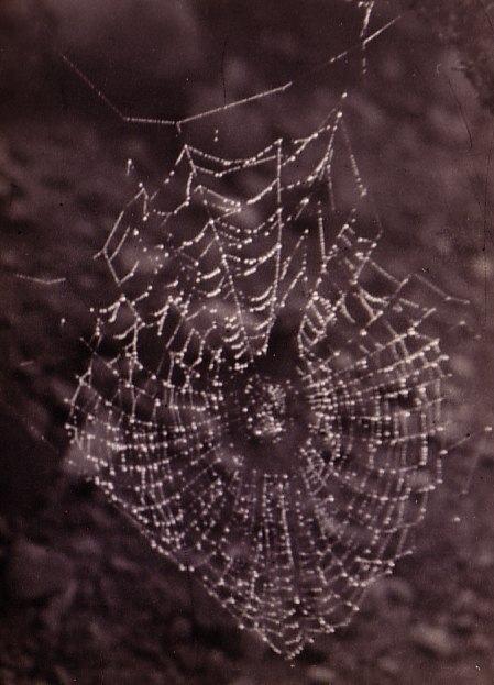 Webweb
