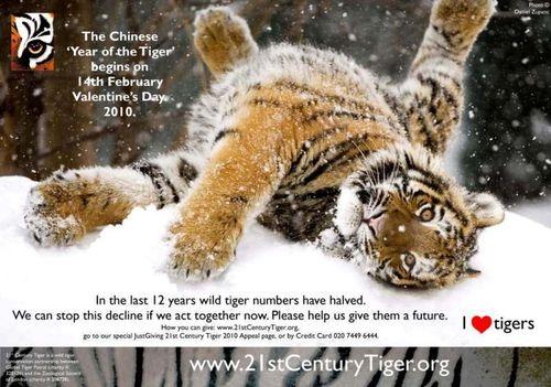 21CT_YoT_TigerAppeal_2010