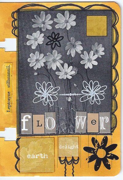 Flower17022013