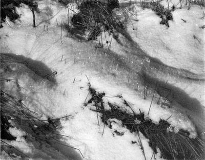 Snowcrystalsglenislaweb1