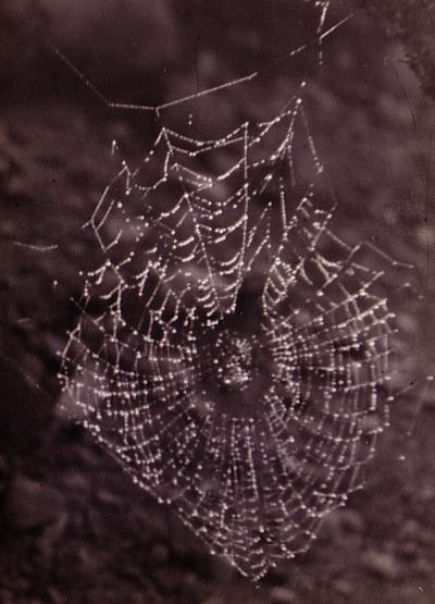 Webweb_2