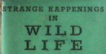 Wildlife_1